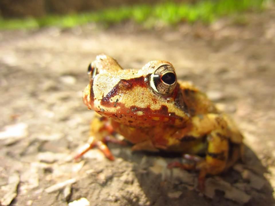 עצר בזמן. צפרדע|צילום: stocksnap.io