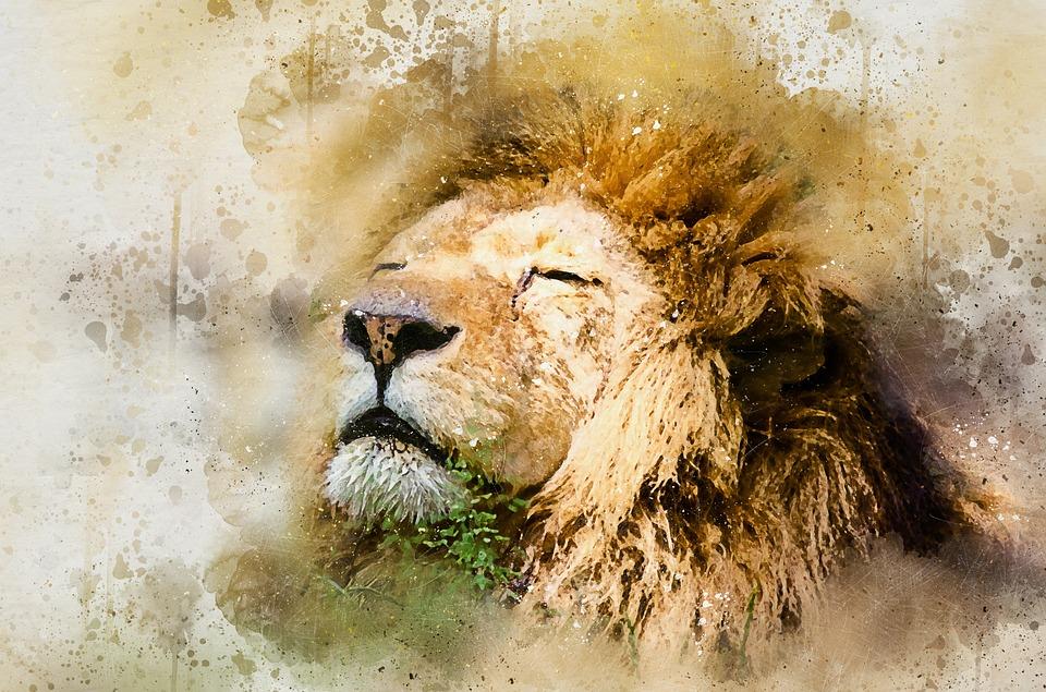 מלך החיות   צילום אתר pixabay